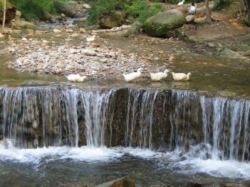 壁纸 风景 旅游 瀑布 山水 桌面 500_375